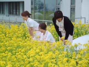 菜の花畑で 3
