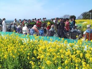 菜の花コンサート 3