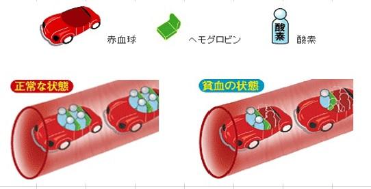 少ない 赤血球