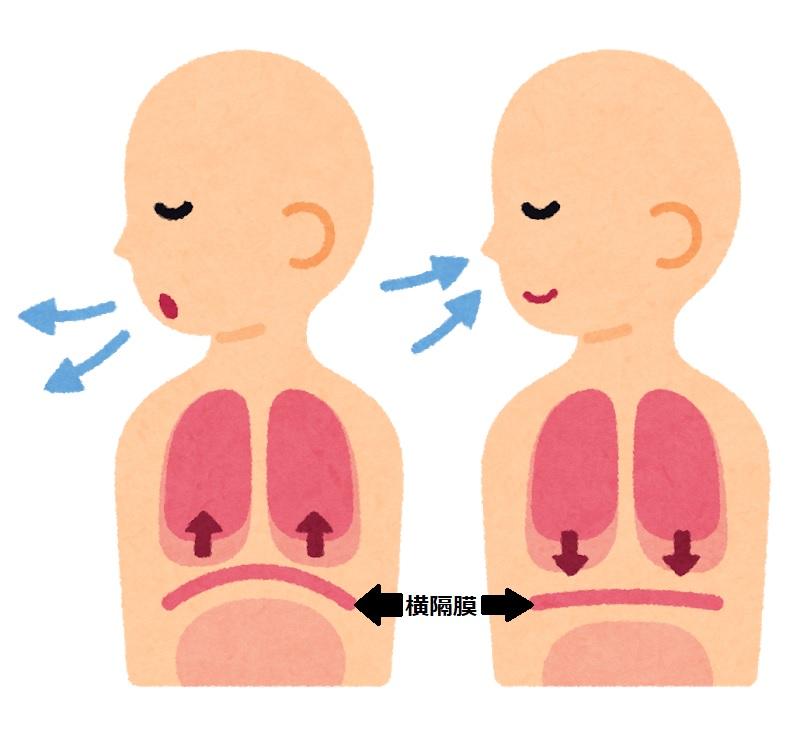 呼吸の仕組みと人工呼吸器1 【臨床工学科】 | 市立御前崎総合病院
